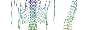 Lower Back Pain Update!