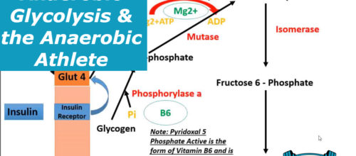 Anaerobic Glycolysis & the Anaerobic Athlete