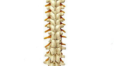 Why It's Important to Understand Spine Biomechanics For Fixing Lower Back Pain